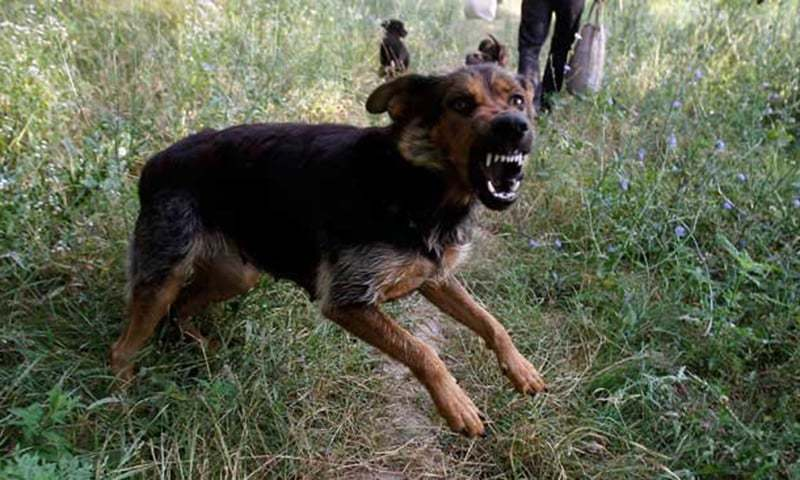 92,000 cases of dog bite happened in Sindh till June 30: minister