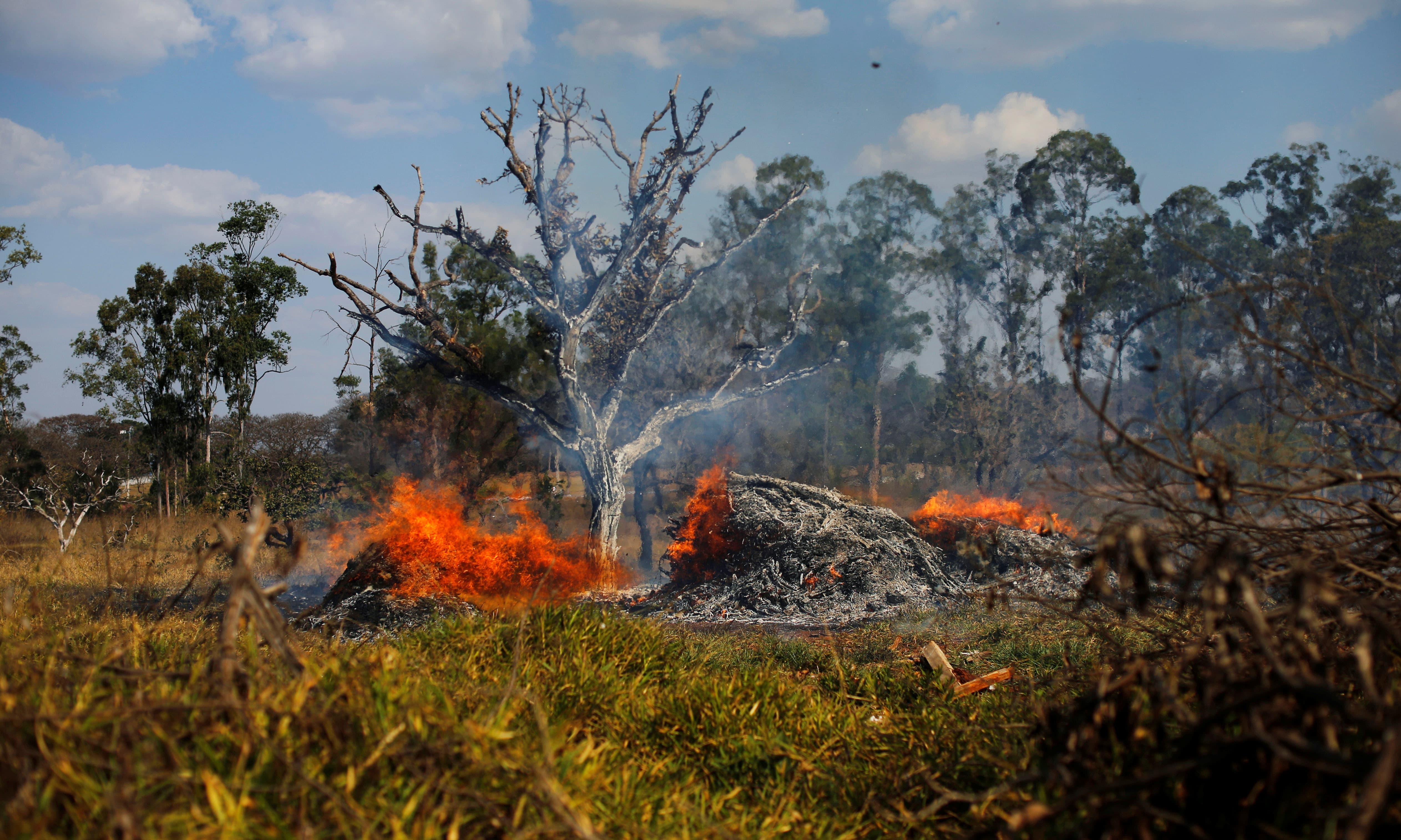 واضح رہے کہ یہ جنگل 9 ممالک تک پھیلا ہوا ہے جن میں برازیل، کولمبیا، پیرو، وینیزویلا، ایکویڈر، بولیویا، گیانا، سرینام اور فرانسیسی گیانا شامل ہیں —فوٹو/ رائٹرز