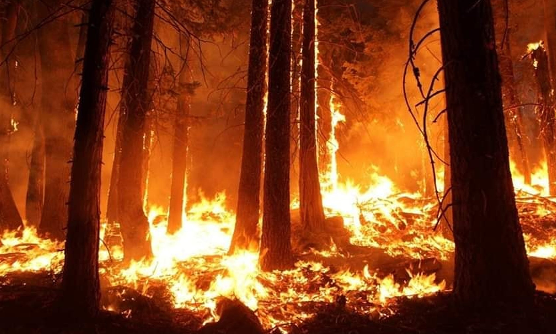 ایمیزون کے جنگلات میں لگی آگ نے شدت اختیار کرلی ہے —فوٹو/رائٹرز