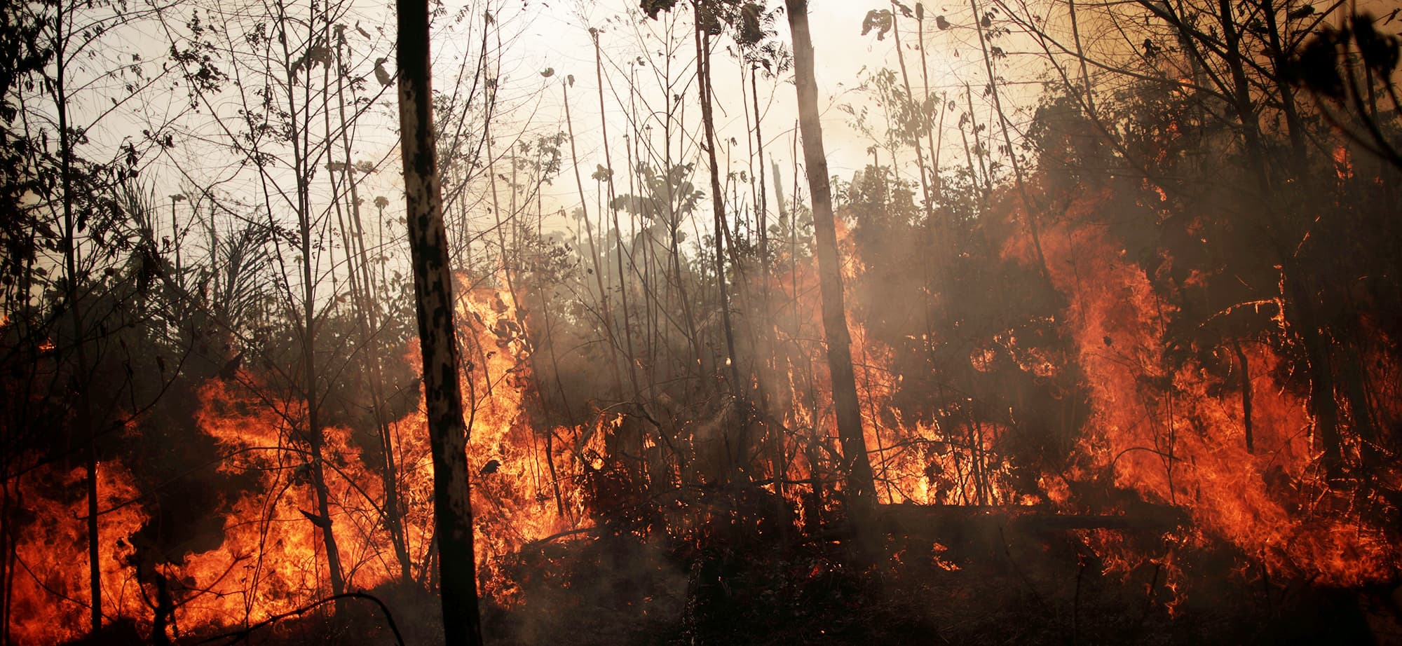 A burning tract of Amazon jungle is seen while as it is being cleared by loggers and farmers in Porto Velho, Brazil, on Friday. — Reuters