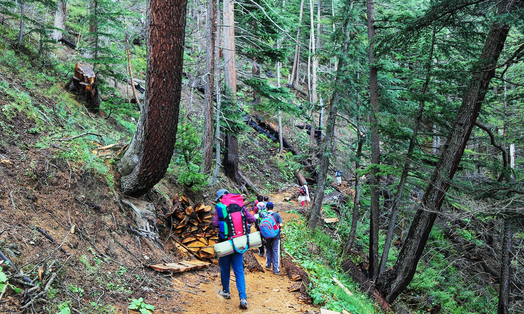 Trekkers and tourists pass through Anakar forest towards Mastij Lake.