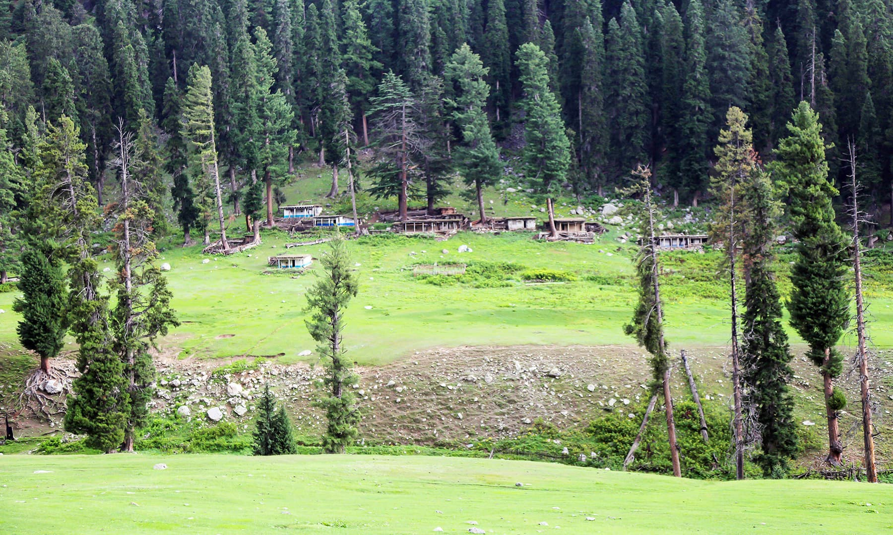 A lush green view of a hamlet in Janshai meadows.