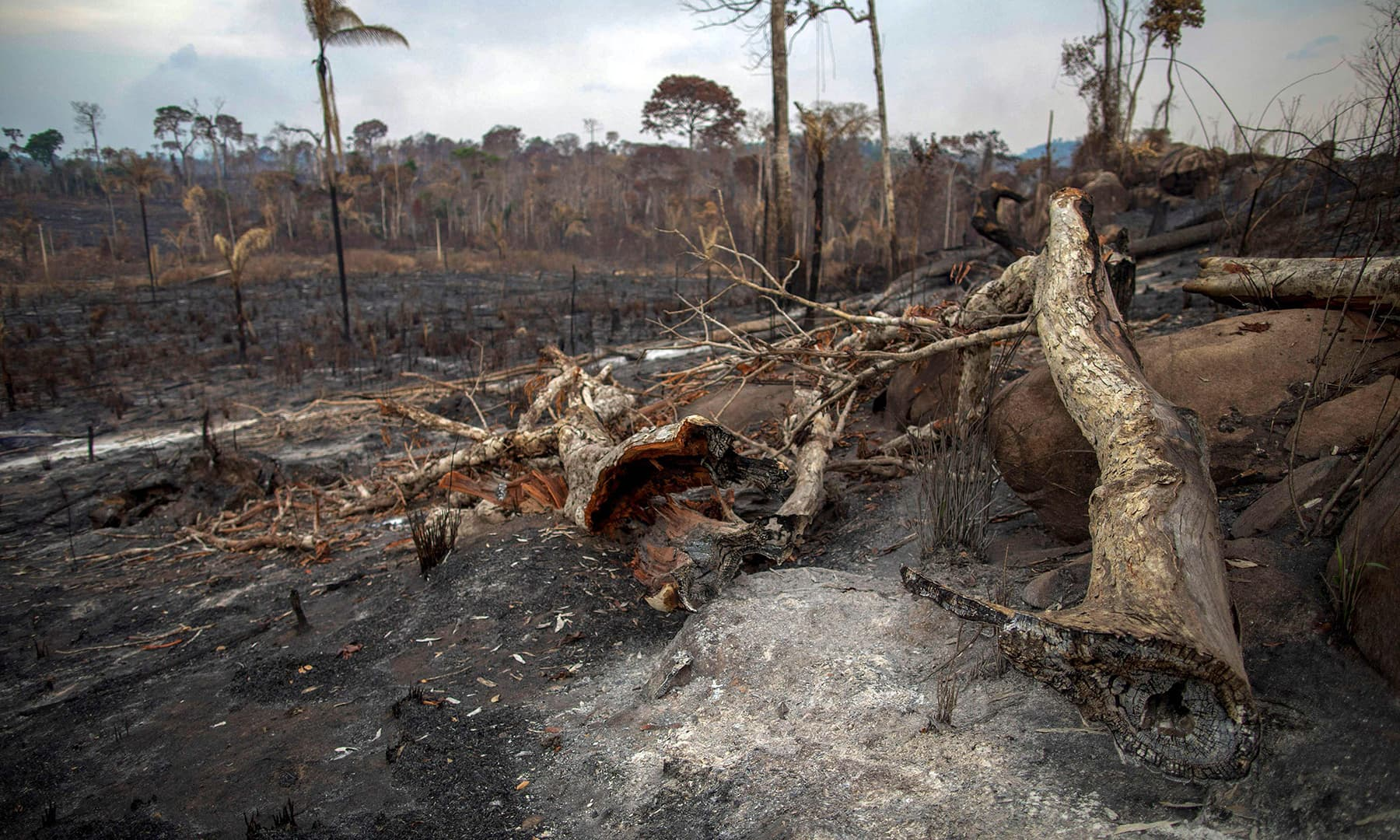 View of a burnt area after a fire in the Amazon rainforest near Novo Progresso, Para state, Brazil, on Sunday. — AFP