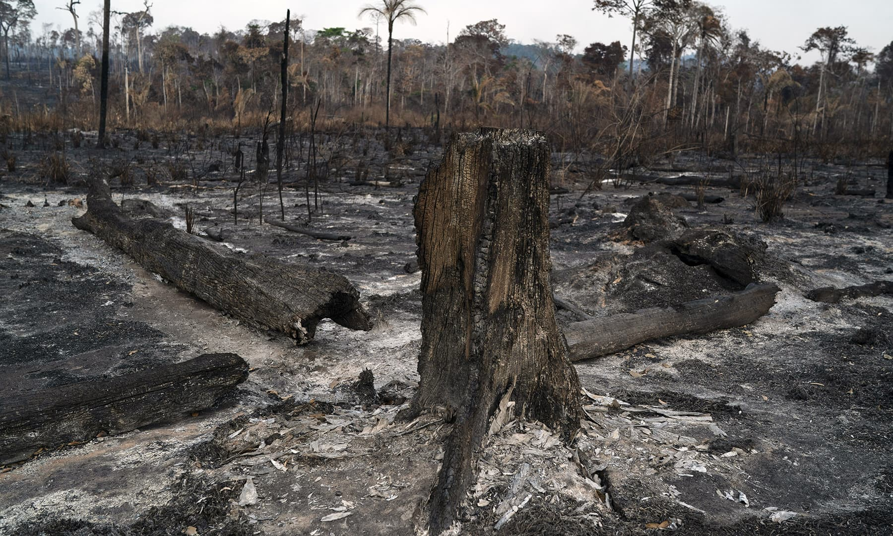 Trees are destroyed after a fire in the Alvorada da Amazonia region in Novo Progresso, Para state, Brazil, Sunday. — AP