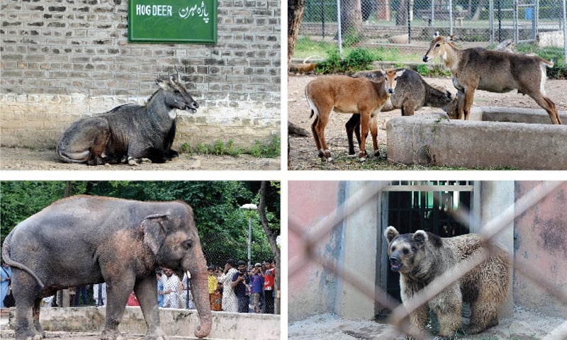 MCI files petition in SC against high court order of handing over zoo to ministry