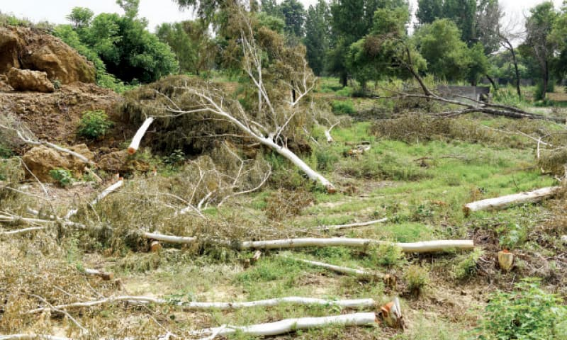 While govt spends billions on plantation, AIOU chops down 80