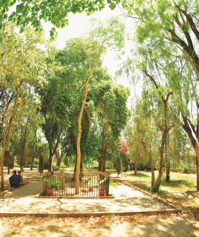 The lean and lanky Bodhi tree at Taxila   Photos by the writer