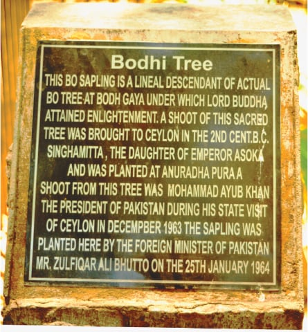 A commemorative plaque at the site of the tree