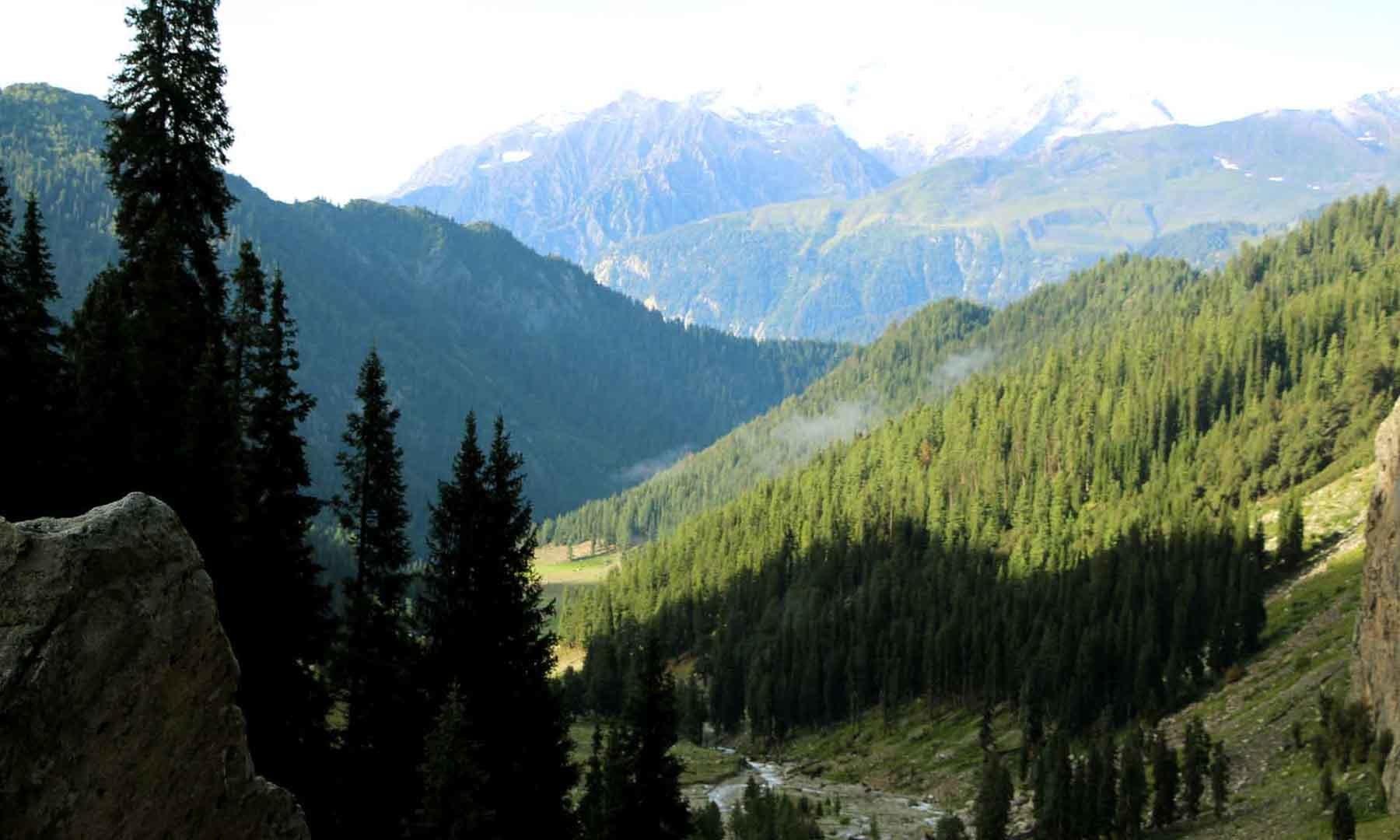 جانشئی بانڈہ کا گھنا جنگل جس میں بے دریغ کٹائی جاری ہے