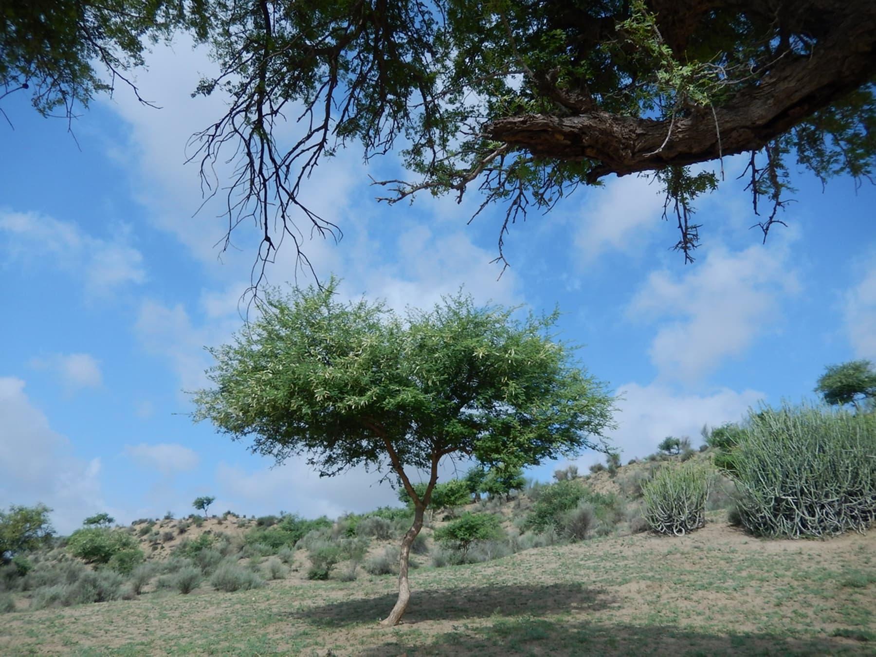برکھا کے بعد تھر کا ایک نظارہ—تصویر ابوبکر شیخ