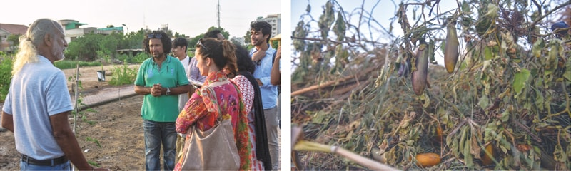 SHAHZAD Qureshi (in green) along with members of civil society, who rushed to the Urban Forest after many of its vegetable plants were uprooted on Wednesday, and (right) unripe aubergines left to rot after the plants that bore them were pulled out.—Fahim Siddiqi / White Star