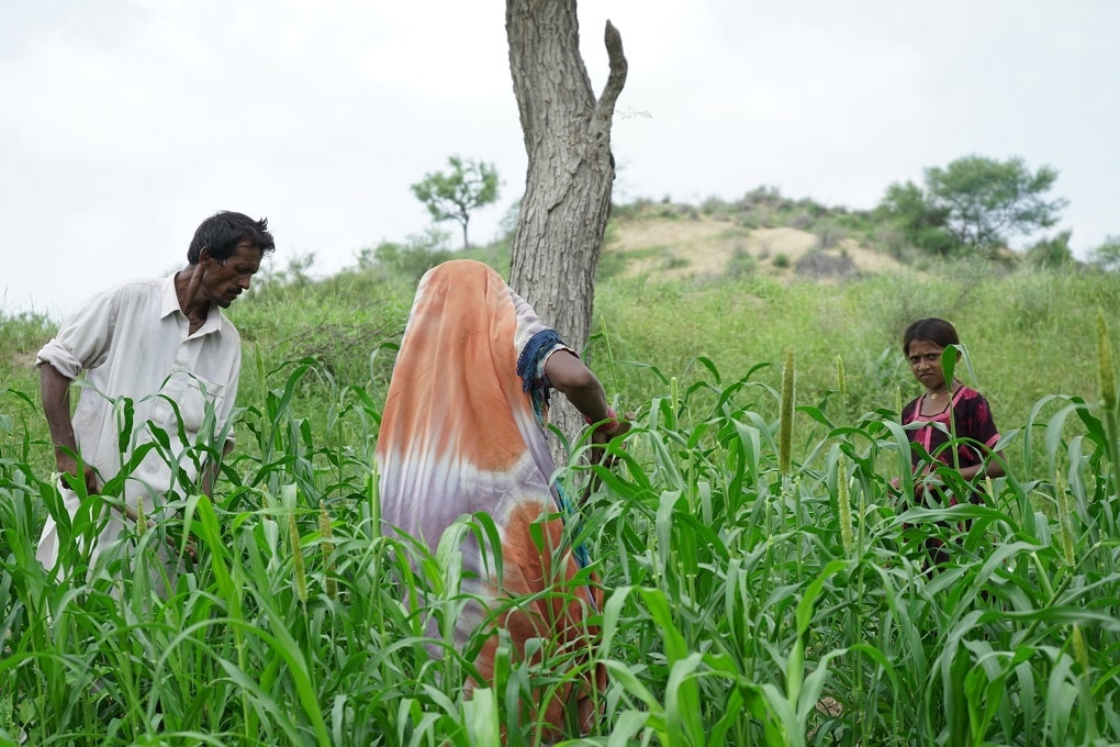 Nehal and his family have returned to work on their farm full time. — Photo by Manoj Genani