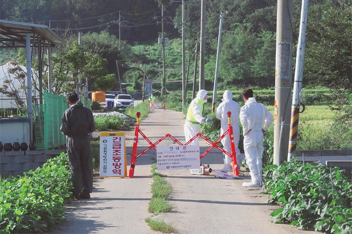 PAJU (South Korea): Quarantine officials set a barricade on a road to block people from entering in an area where pigs were confirmed to have been infected with African swine fever.—AFP