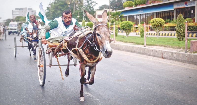 Some donkeys have to run overtime to salvage pride as well as work for their masters | Photos by Fahim Siddiqi / White Star