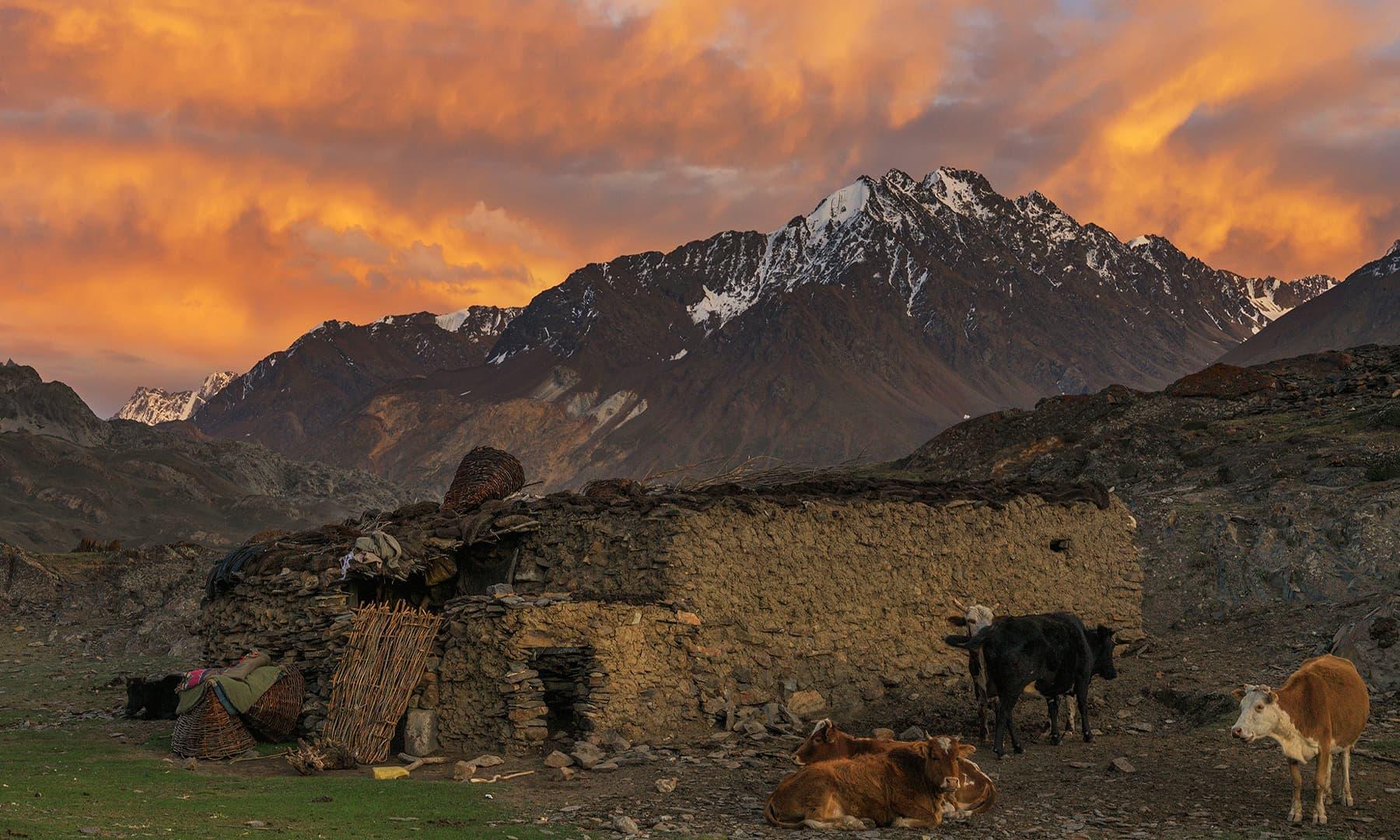 15 سے 16 گھروں پر مشتمل ایک چھوٹا سا گاؤں شوار شیر—سید مہدی بخاری