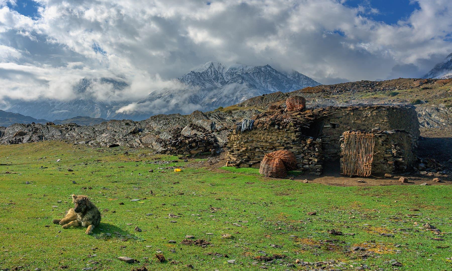 گھر اور رکھوالا کتا—سید مہدی بخاری