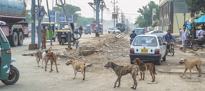 A pack of stray dogs roams around North Nazimabad on Saturday.—White Star