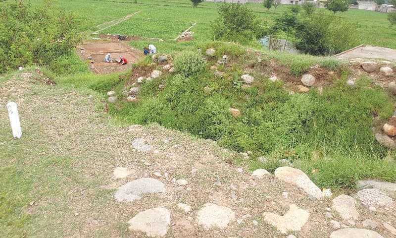 The mound at Bado Dheri from which treasure hunters had stolen archaeological items before the excavation started / Photos by the writer