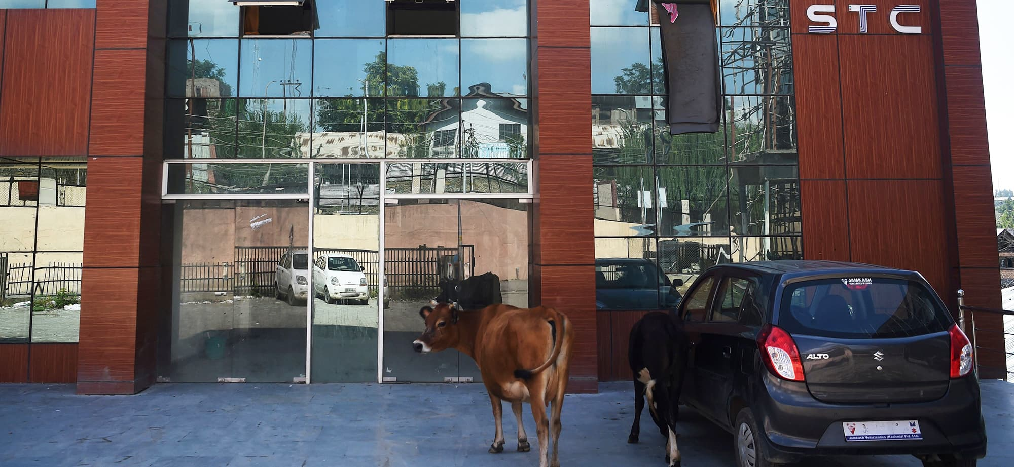 (FILES) In this file photo taken on August 18, 2019 cattle roam outside a closed building with offices of the internet provider STC and other software companies in the Rangreth industrial estate in Srinagar. - The coffee machines have been cold, computer screens blank and work stations empty for two months in Kashmir's Silicon Valley as an Indian communications blockade on the troubled region takes a growing toll on business. (Photo by Punit PARANJPE / AFP) — AFP or licensors