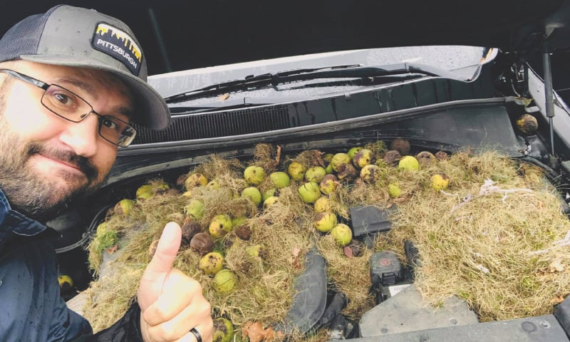 Allegheny County (Pennsylvania, US): A man points to walnuts and grass hidden by squirrels under the hood of a car in this photo obtained from social media.—Reuters