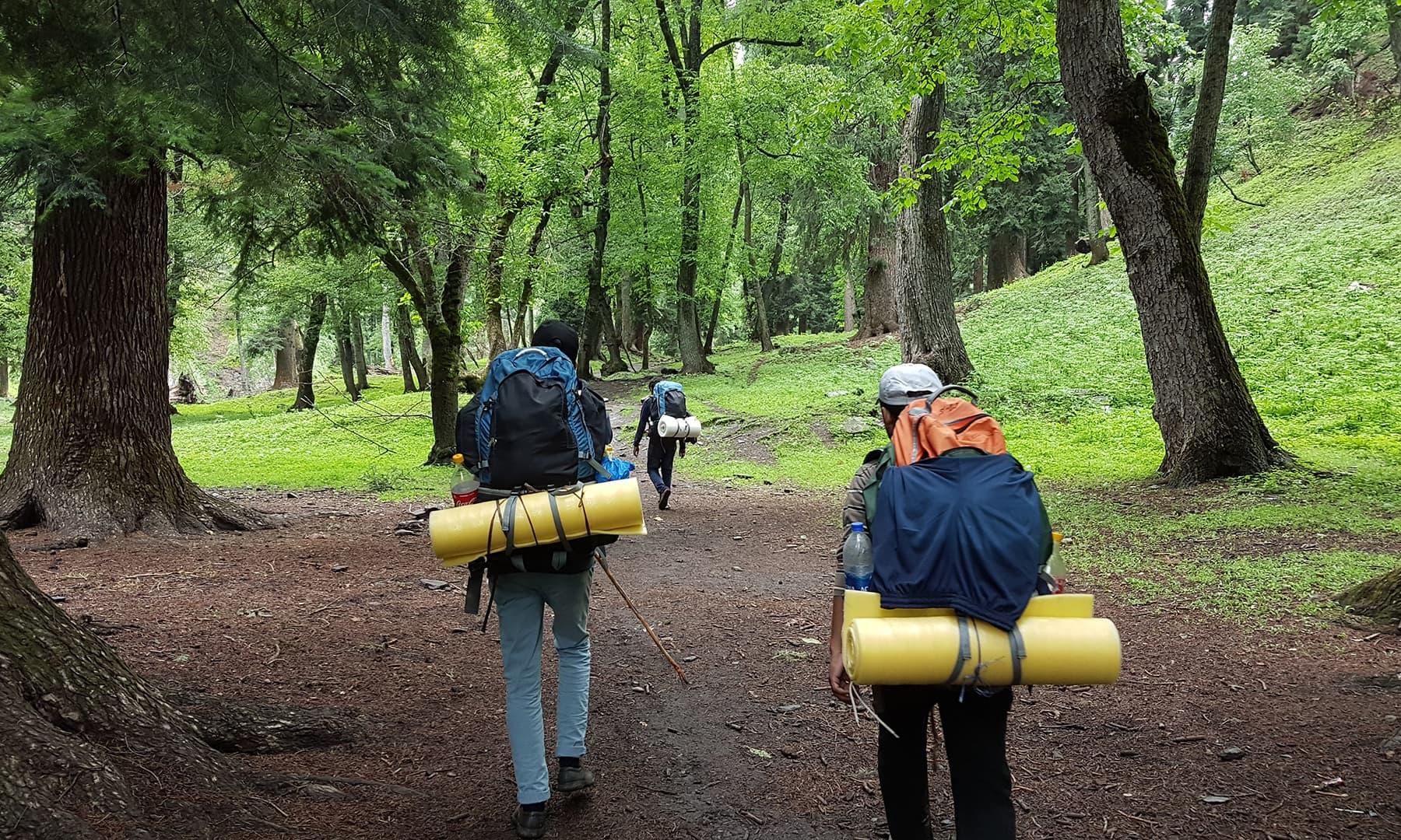 جنگل سے گزرتے ہوئے—اعجاز بھٹی