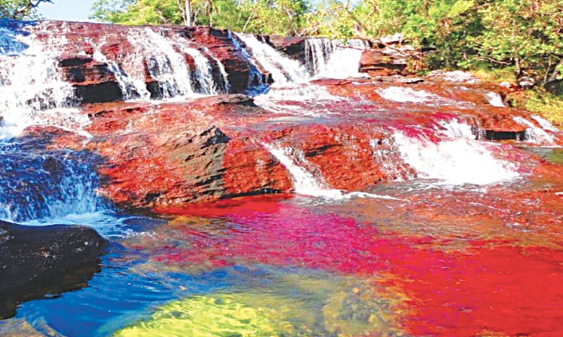 The liquid rainbow, Cano Cristales River, Colombia