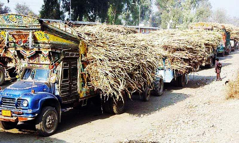 Sindh's cane growers demand Rs250 per 40kg which millers are not ready to pay. — APP/File