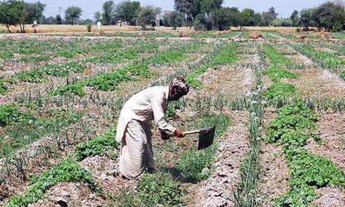 Government should write off loans of, disburse assistance to farmers from heatwave hit areas, says FBP president. — APP/File