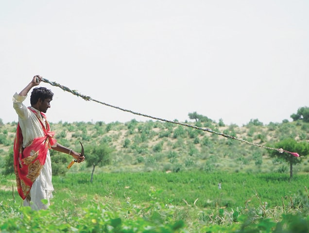 A young Thari man swings rope to create a vibration and scare away locusts