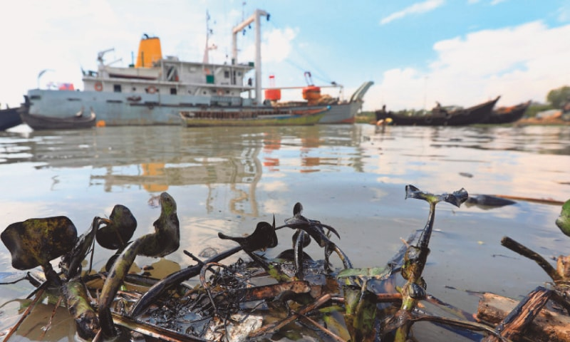Chittagong: Vegetation covered in oil is seen after diesel spilled into the Karnaphuli River following a collision of two tankers at a jetty.—AFP