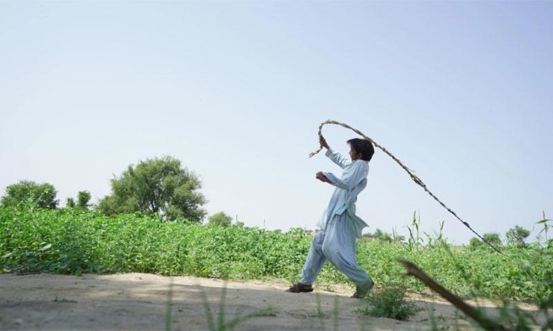 A boy attempts to drive away locusts. — Manoj Genani