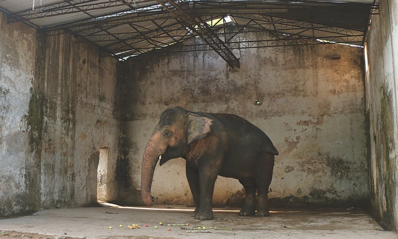 Kaavan in Islamabad Zoo, 2015 | Photos by the writer