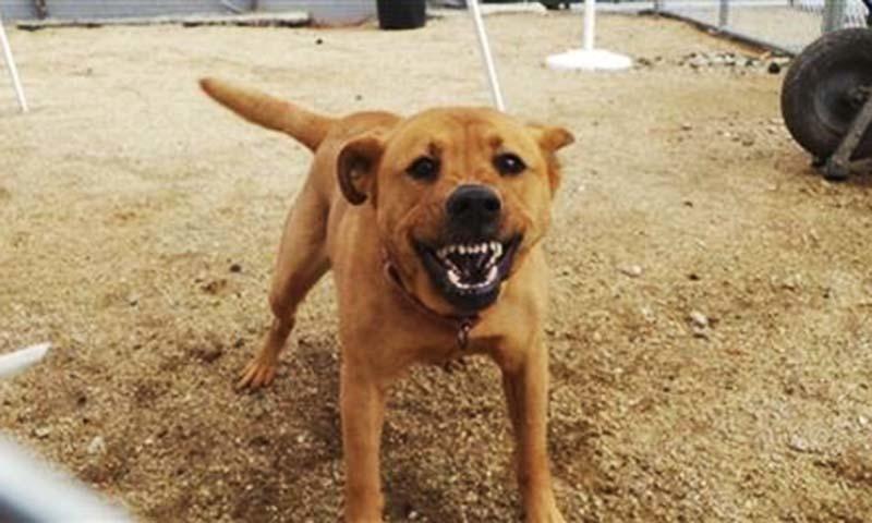 کتے کے کاٹنے پر بروقت ویکسین نہ ملنے سے ریبیز ہوجاتی ہے —فائل فوٹو: اے ایف پی