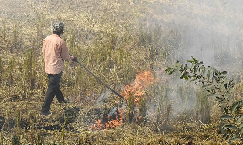 In this photo taken on October 6, a farmer burns straw stubble after harvesting paddy crops in a field at a village near Sultanpur Lodhi. — AFP
