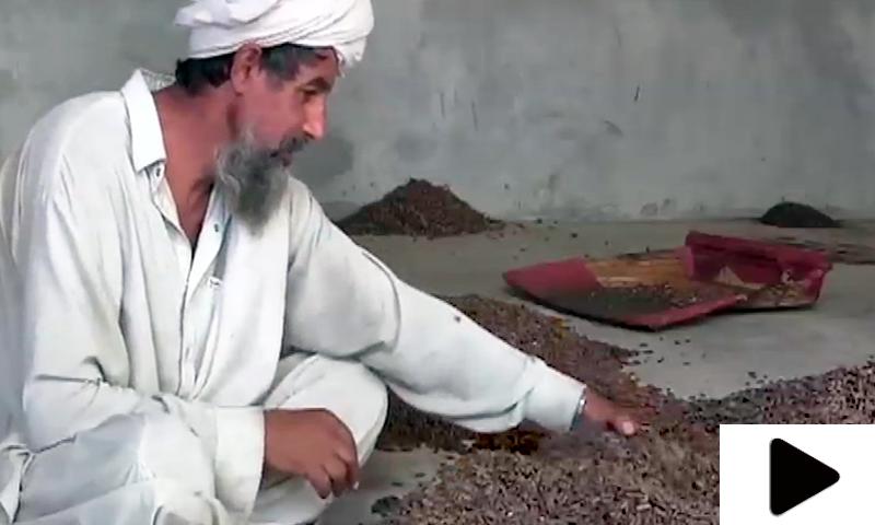 ایک کروڑ 20 لاکھ روپے مالیت کے چلغوزوں کی ڈکیتی