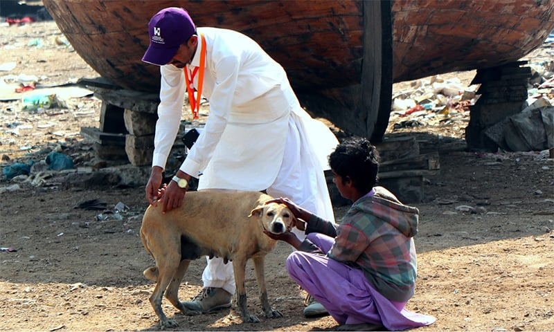 The project aims at catching dogs and releasing them after the procedure. — The Indus Hospital/File