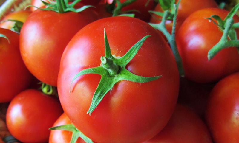 حکومت نے ٹماٹر کی درآمد پر 5.5 فیصد ود ہولڈنگ ٹیکس پر چھوٹ نہیں دی۔—فائل فوٹو: شٹر اسٹاک