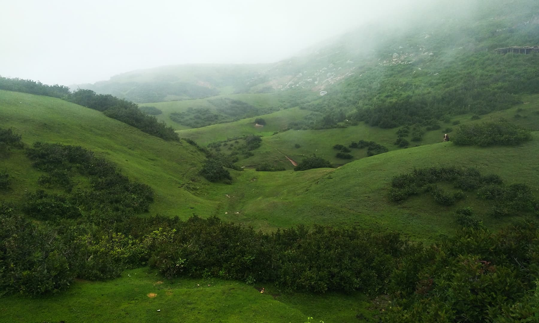 سبز میدانوں کا دلکش نظارہ— عظمت اکبر