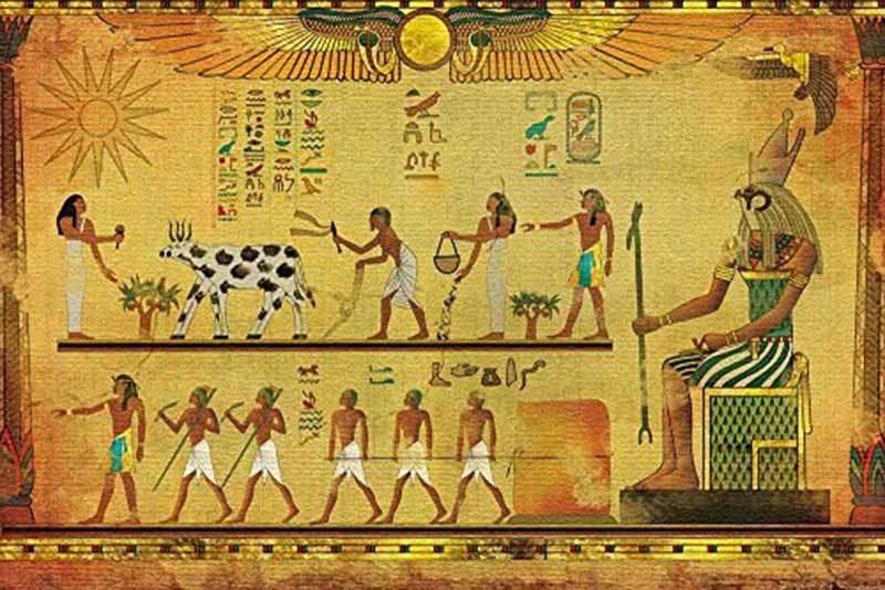 'مصری میورل' کا ایک نمونہ