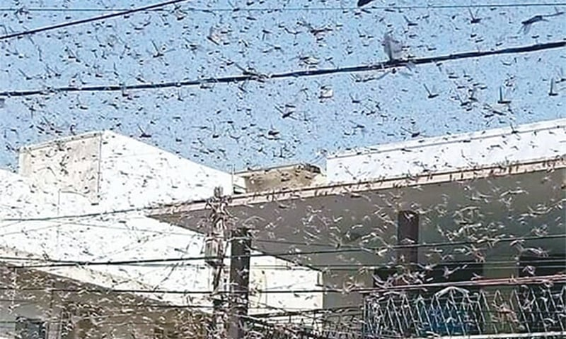 Govt allocates Rs500m to control locust attack, NA body informed