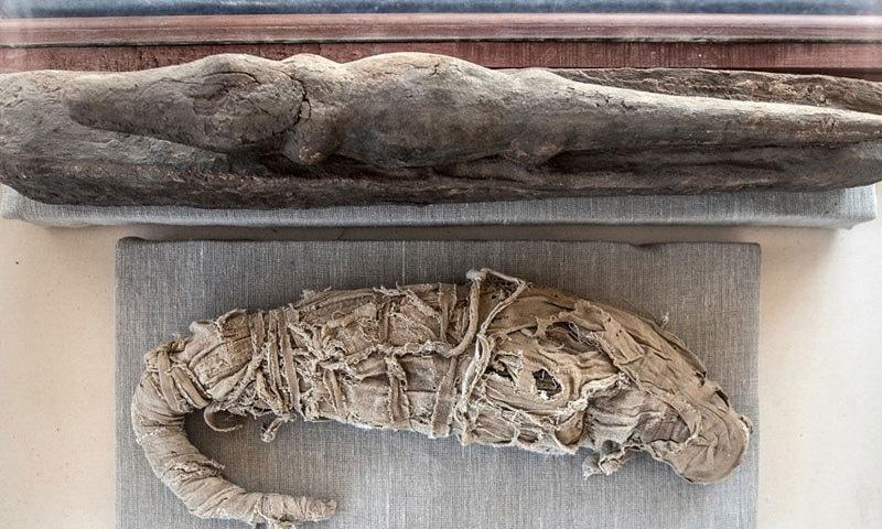 سانپ اور نیولے کی حنوط شدہ لاشیں بھی ملیں—فوٹو: اے ایف پی