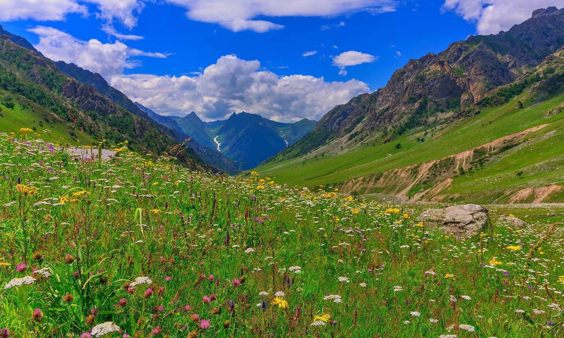 Near Burzil Pass. — Photo by Syed Mehdi Bukhari