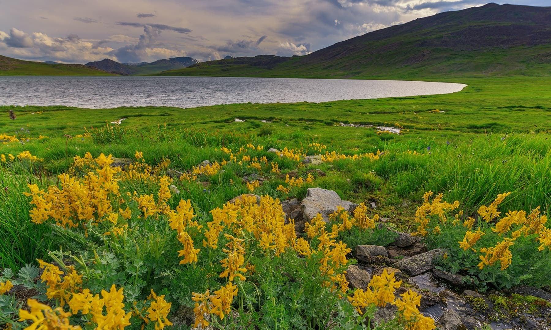 On the banks of Sheosar Lake. — Photo by Syed Mehdi Bukhari