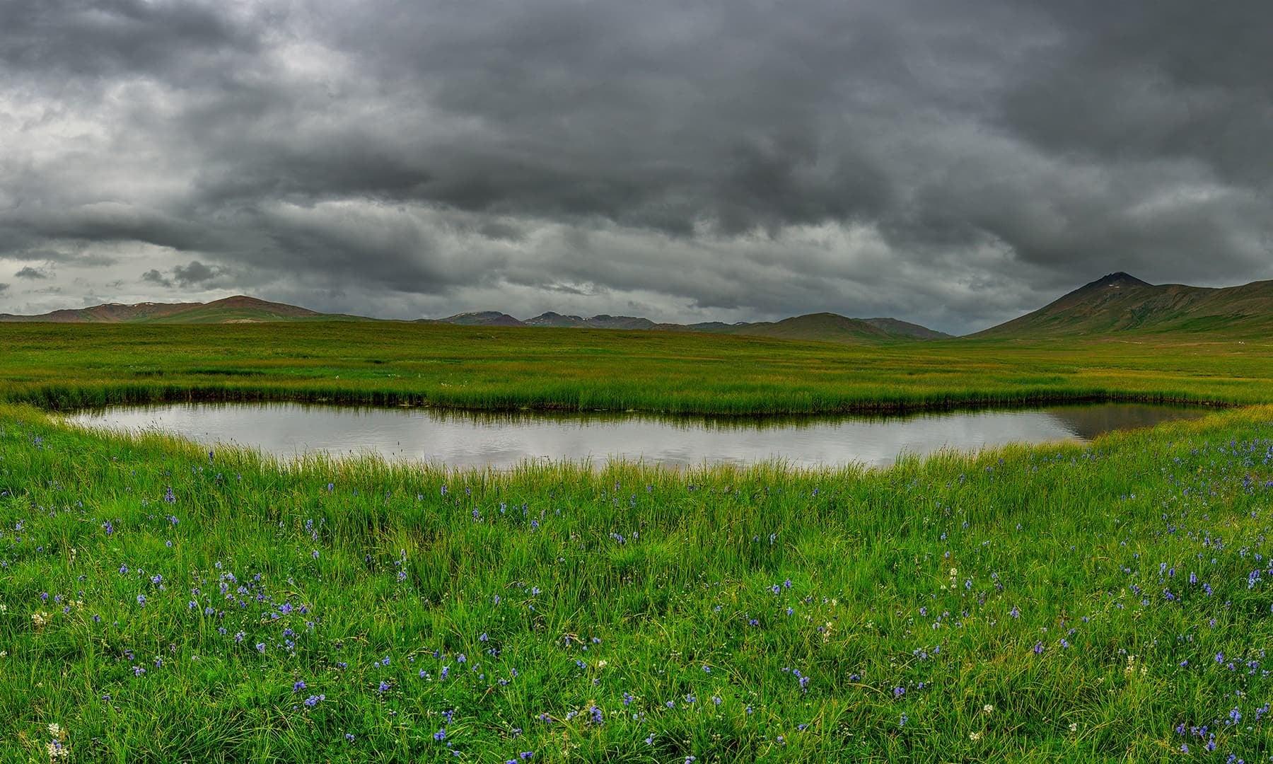 Deosai plains. — Photo by Syed Mehdi Bukhari