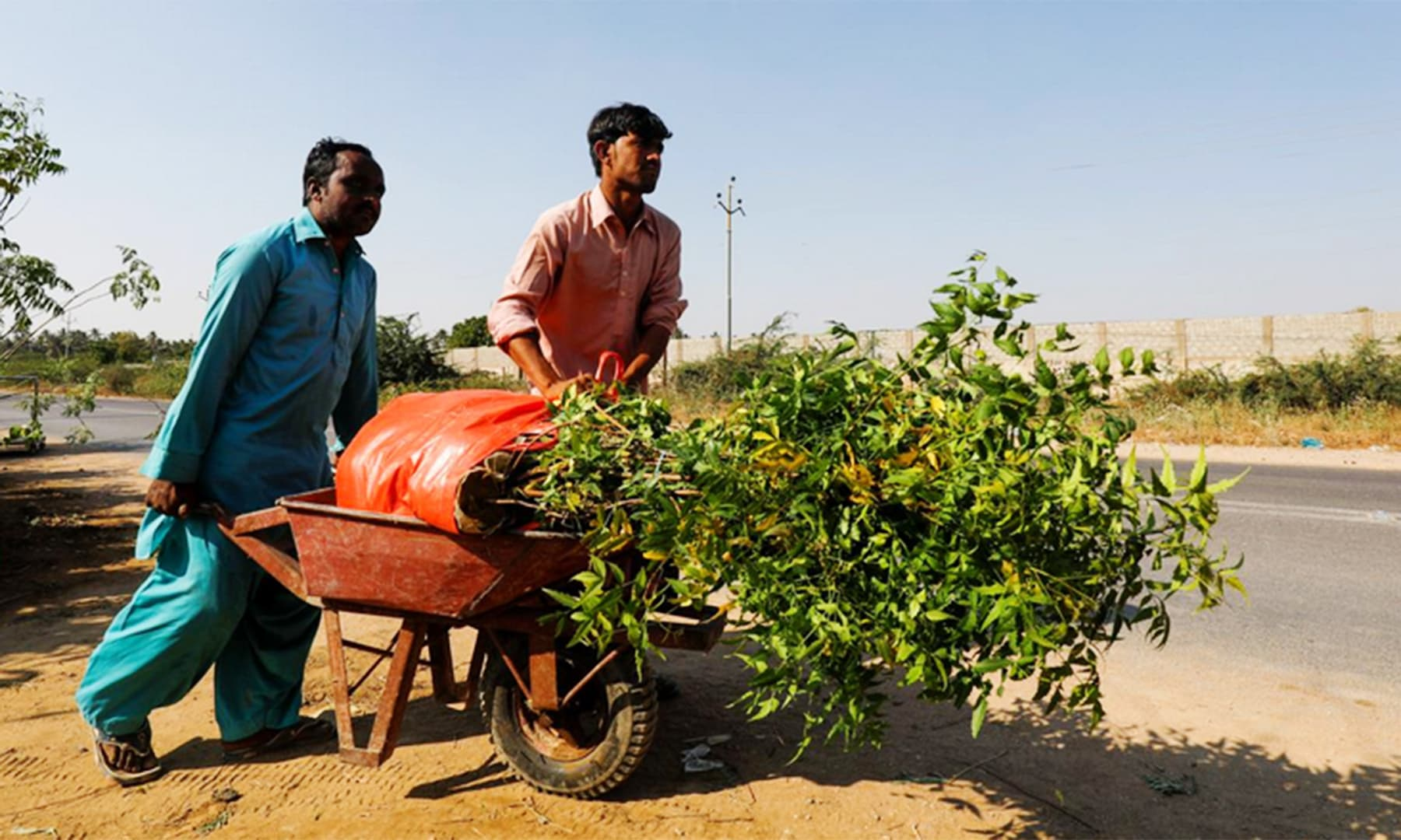 Labourers move a wheelbarrow with bags of plants to be transported for planting along the pilgrimage route from Najaf to Karbala, at a farm on the outskirts of Karachi, on Friday. — Reuters