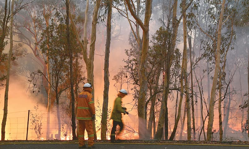 Firefighters conduct back burning measures to secure residential areas from encroaching bushfires at the Mangrove area in Central Coast, some 90-110 kilometres north of Sydney on Saturday. —AFP