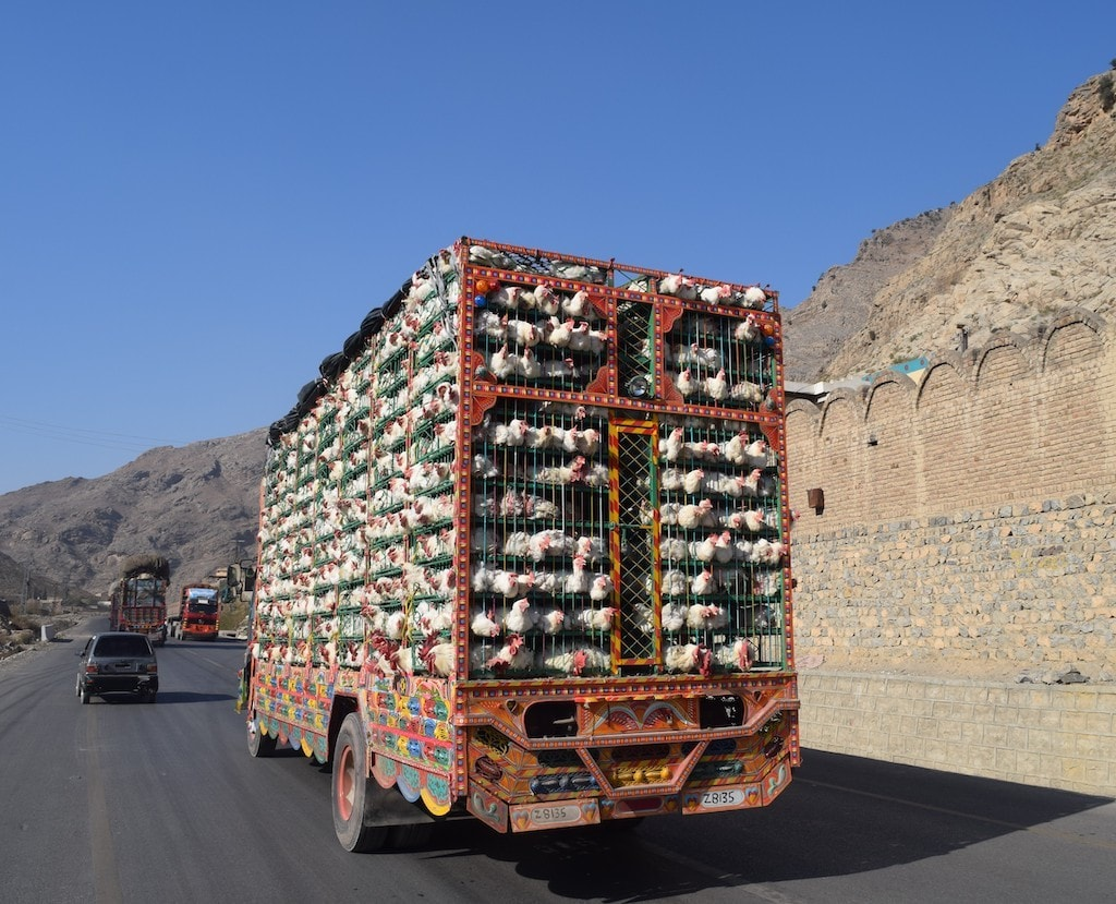 Chickens travelling to Afghanistan.