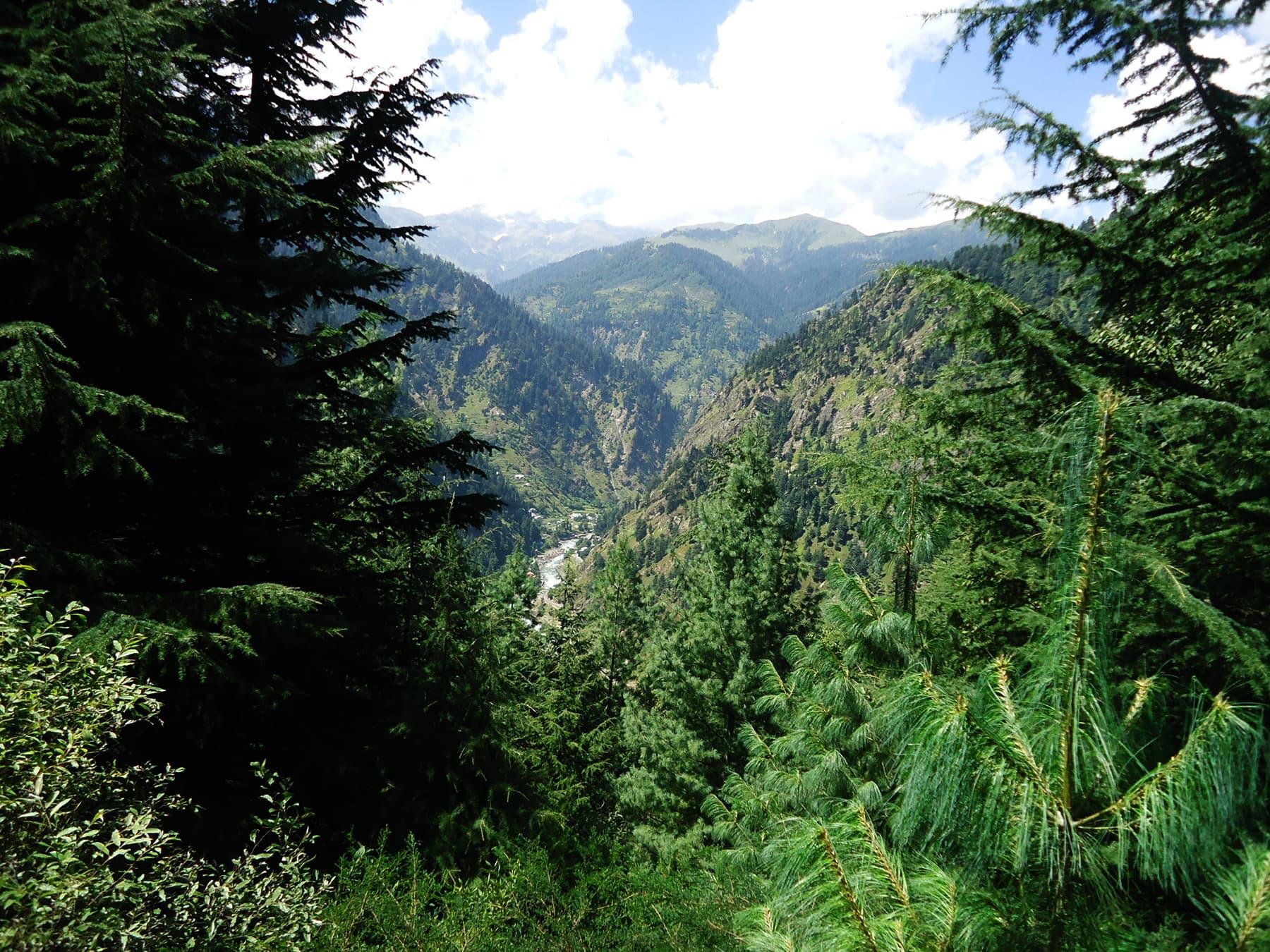 وادئ کاغان کا دوسرا بڑا جنگل کمال بن—تصویر لکھاری