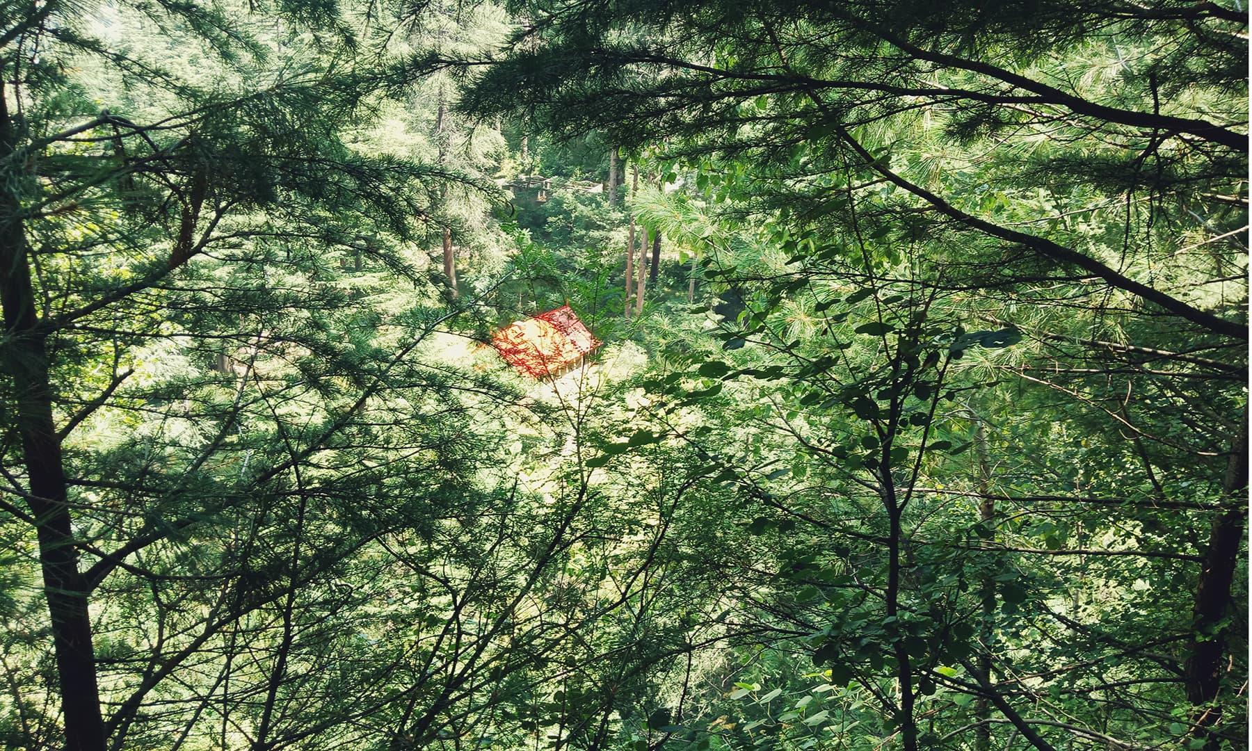 کمال بن کے جنگل میں واقع محکمہ جنگلات کا ریسٹ ہاؤس—محمد فیاض خان سواتی