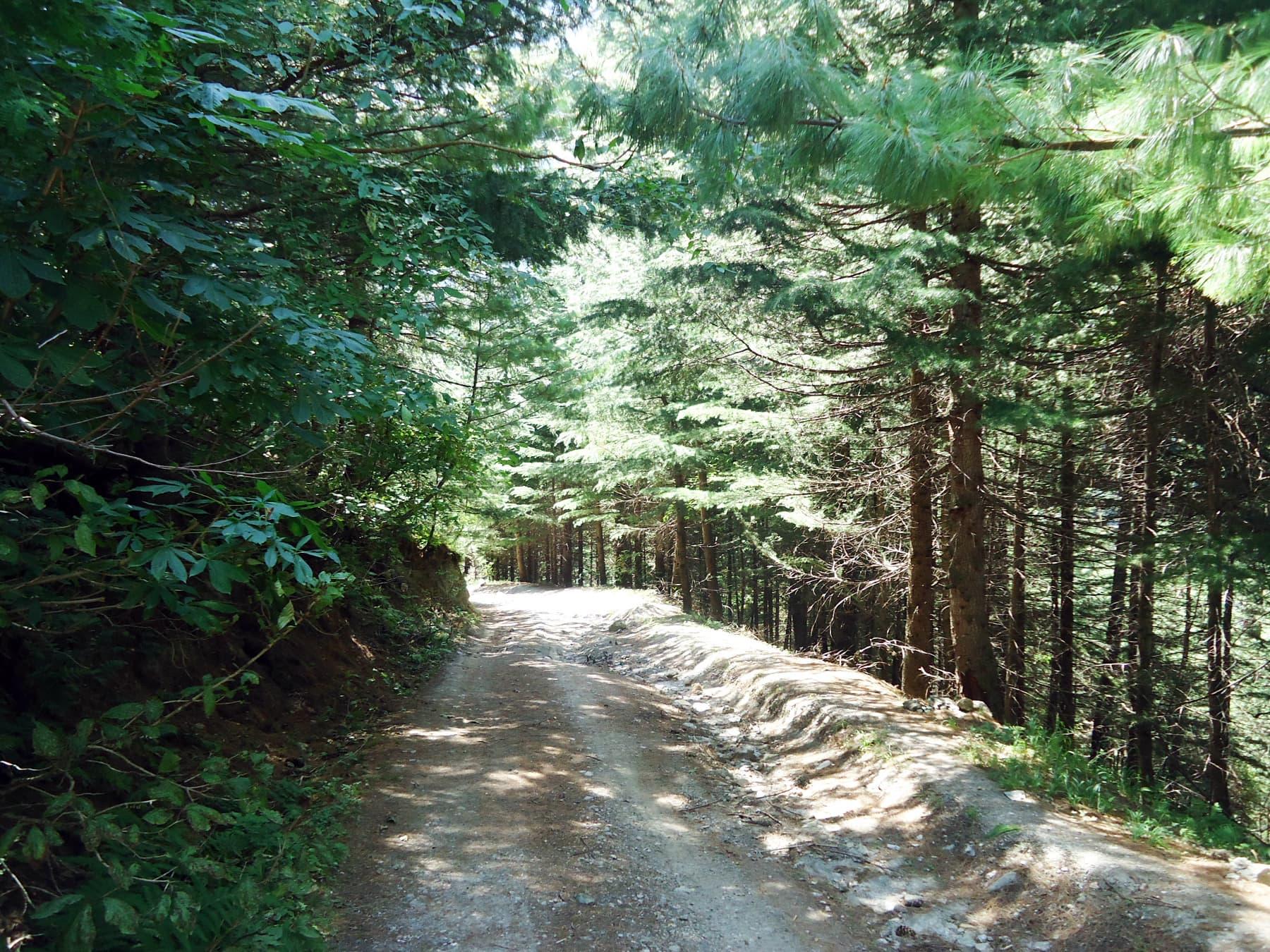 کمال بن کا گھنا جنگل—تصویر لکھاری